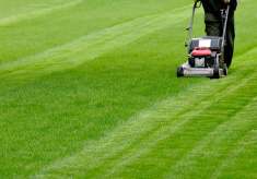 Simple Tips For The Perfect Lawn
