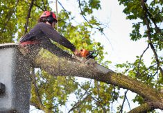 How To Remove A Tree From Your Yard