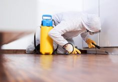How to Spot Pest Infestation During House Tour