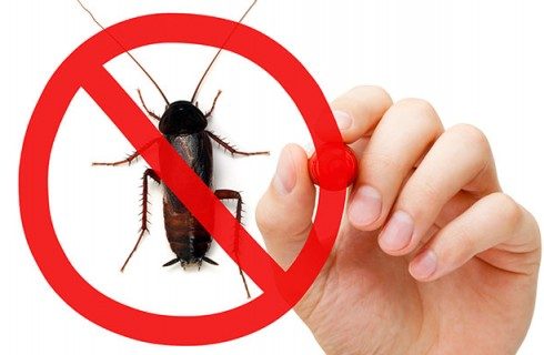 Things to Remember Choosing a Pest Control Provider