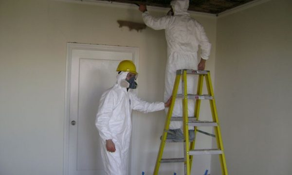 Is Water Damage a Guarantee for Black Mold?