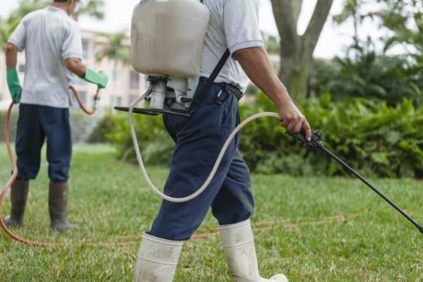 Domestic pest control unit