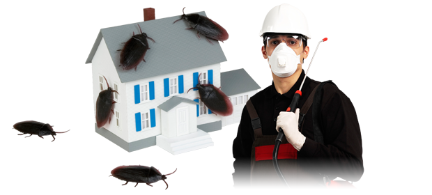 Pest Control Provider 4