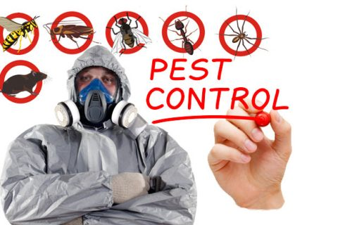How to Choose a Pest Control Provider in NYC Region