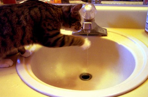 How To Avoid Pet Plumbing Problems
