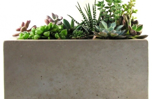 Why Planters Are the Best Choice for Budding & Experienced Gardeners